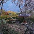 お休みどころは冬桜の下